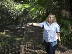 Volunteer Bitten by Tiger at Carole Baskin's Big Cat Rescue
